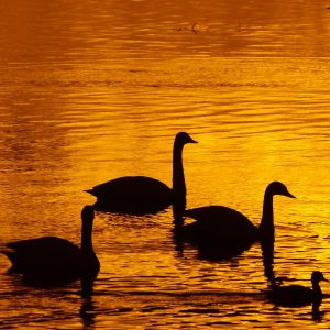 夕時の湖沼にて