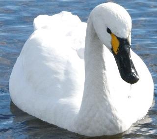 3PR白鳥