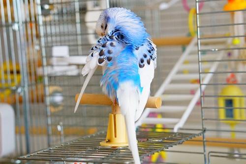 小鳥の羽繕い