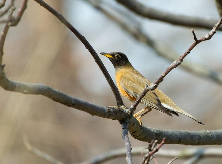 木の枝に止まる野鳥