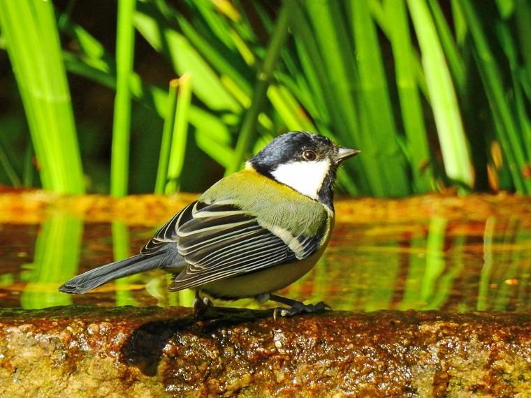 水浴びにきた野鳥