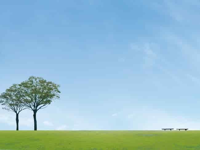 動かない樹木