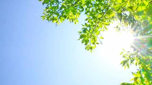 陽光を浴びる葉