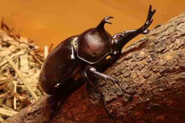 昆虫の硬い外骨格
