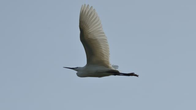 つばさで飛ぶ鳥